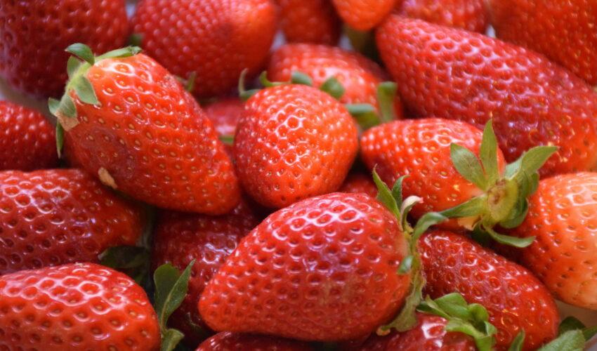 Wieder erntefrische Erdbeeren zu verkaufen