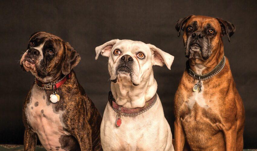 Gefahr durch freilaufende Hunde