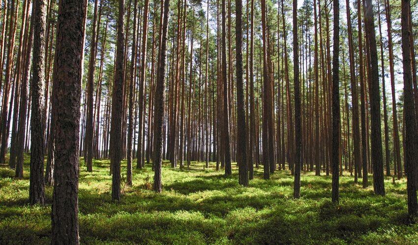 Einladung zur Waldbegehung am 28. Juli 2021