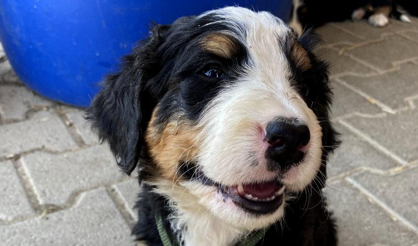 Informationen zur Hundesteuer